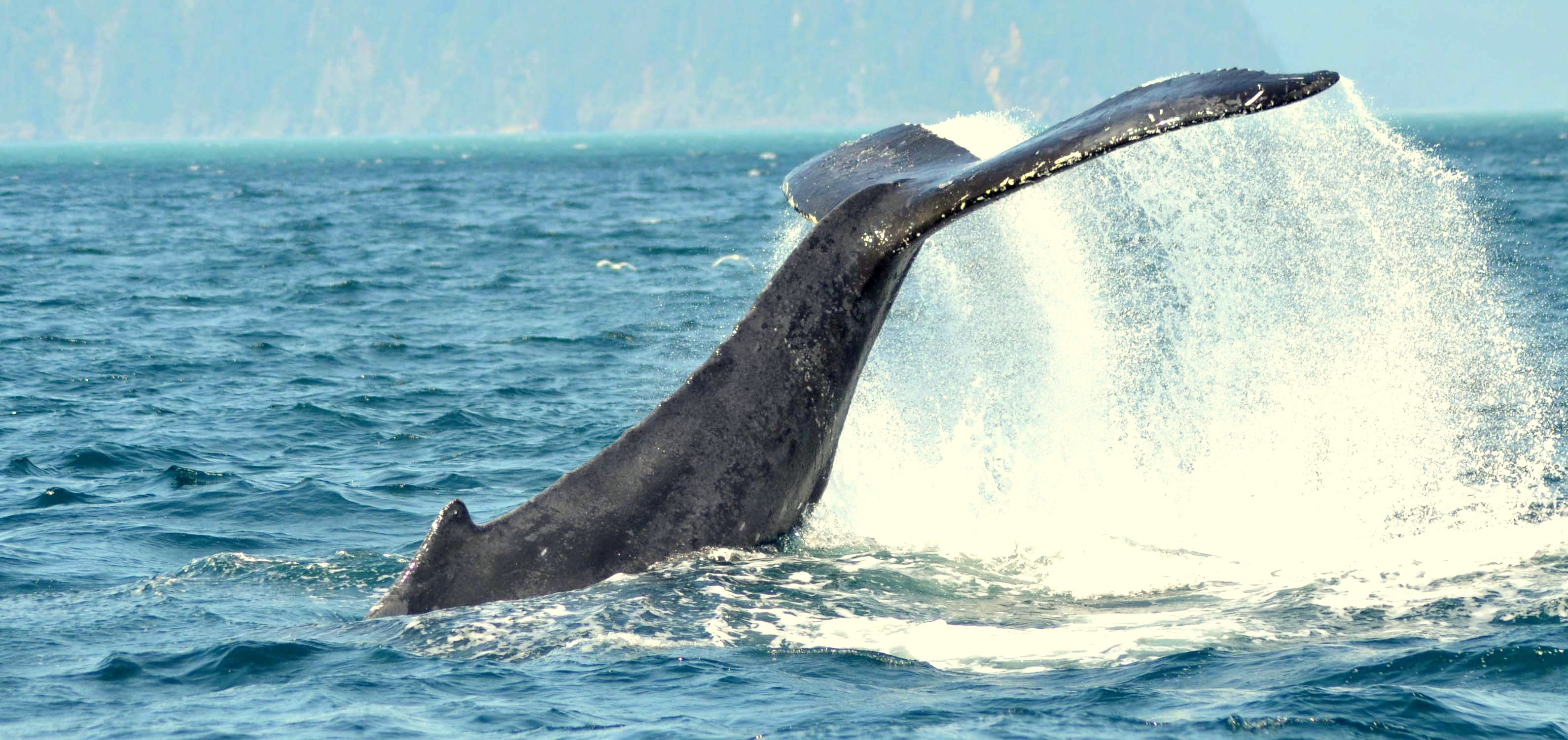 09-NLA-Whale-Tail-3