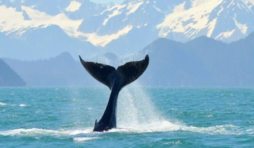 13-whale-watching-012