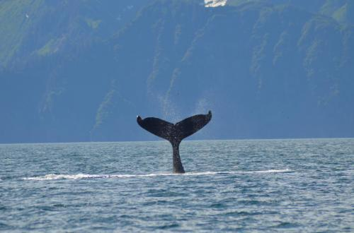 16-whale-watching-015