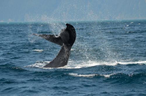 19-whale-watching-018