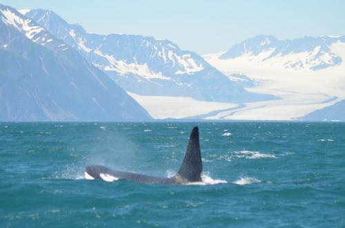 21-whale-watching-020
