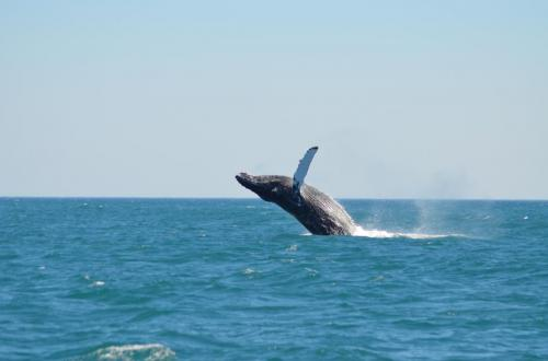 26-whale-watching-025