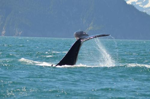 31-whale-watching-030