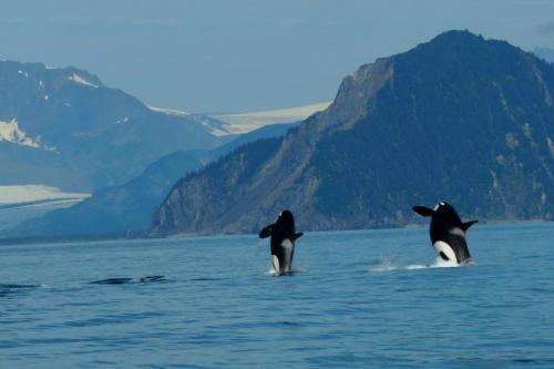 orca-dbl-breach